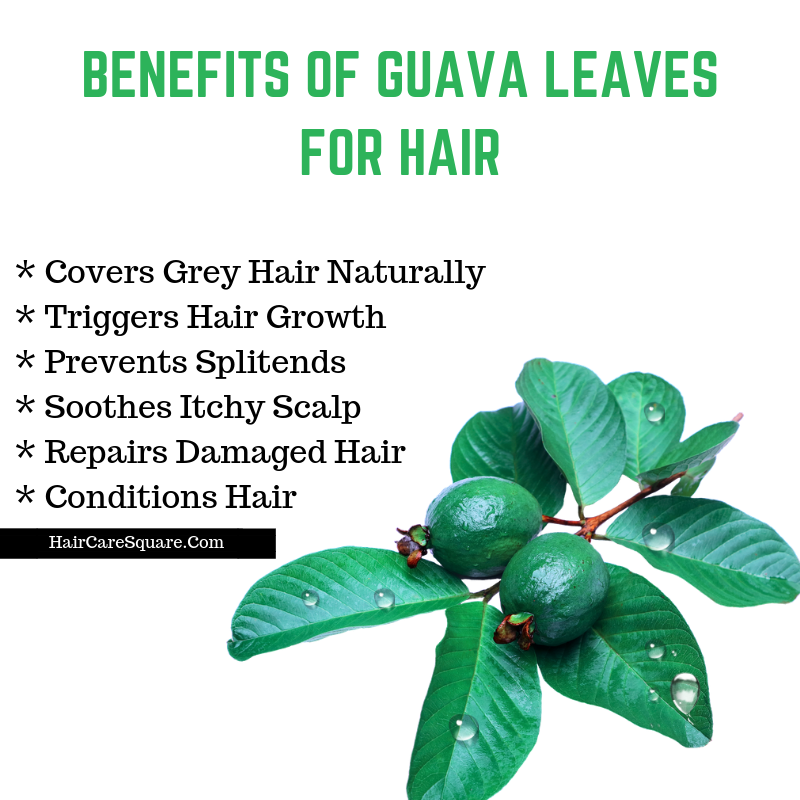 guava leaves benefit for hair
